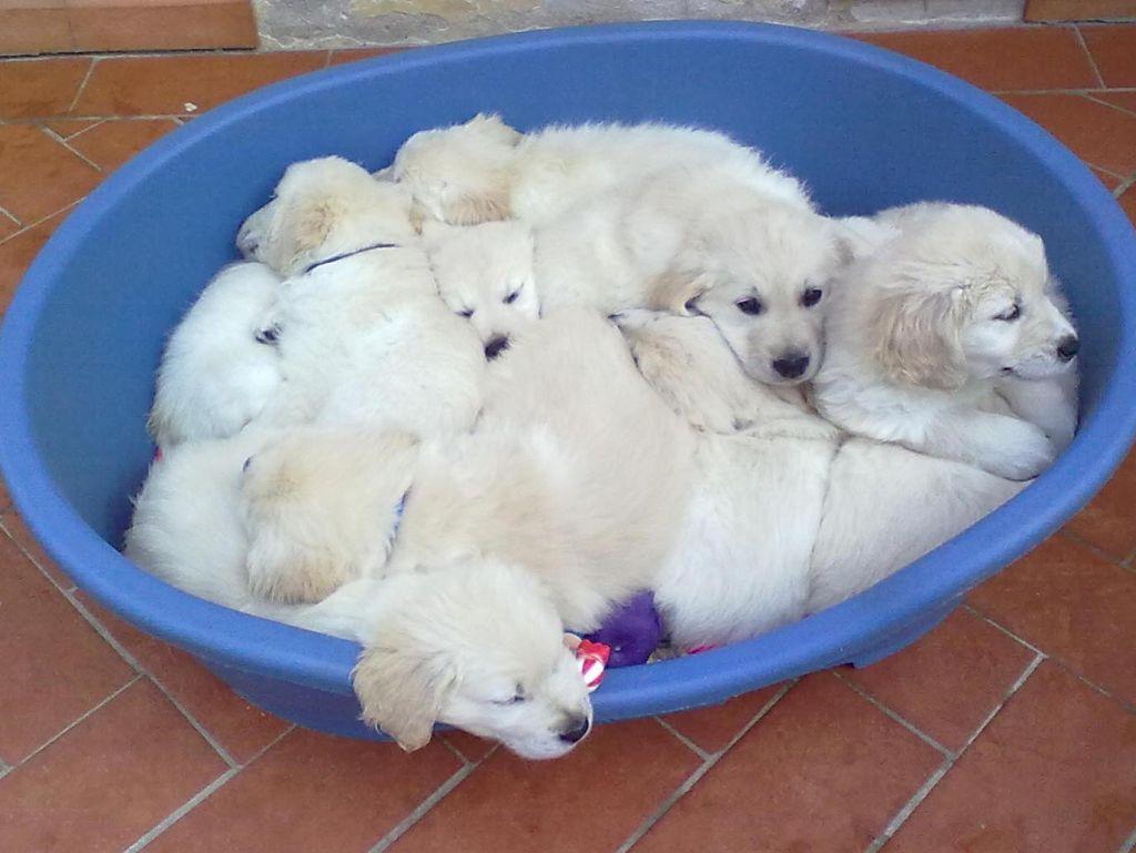 Scuola Nazionale Cani Guida Per Ciechi Toscana Accessibile